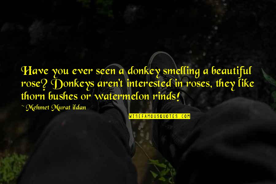 Rinds Quotes By Mehmet Murat Ildan: Have you ever seen a donkey smelling a