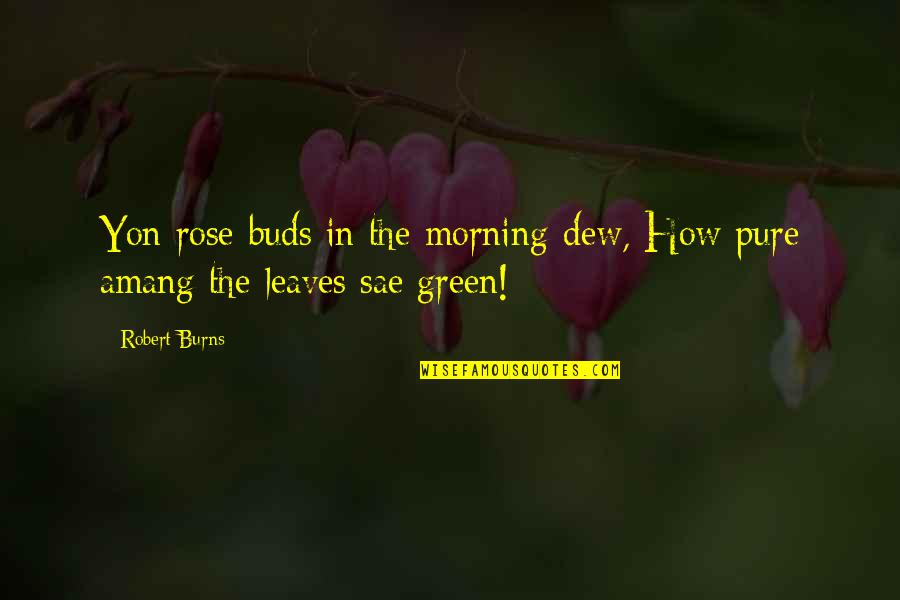 Robert Burns Quotes By Robert Burns: Yon rose-buds in the morning-dew, How pure amang