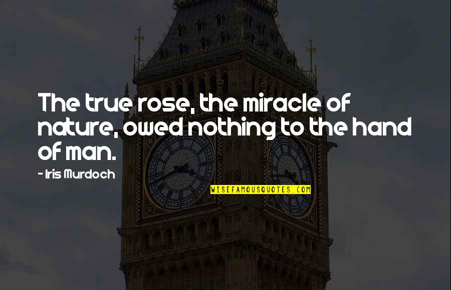 Rose In Hand Quotes By Iris Murdoch: The true rose, the miracle of nature, owed