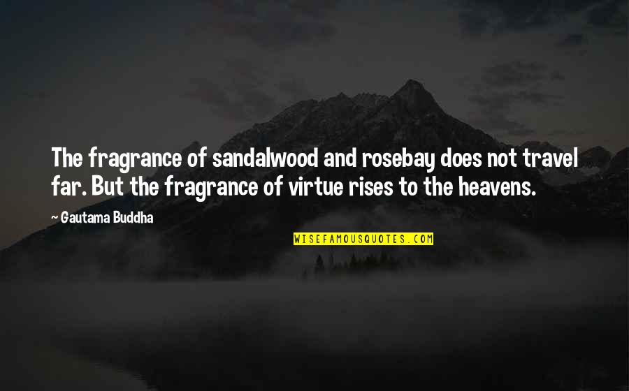 Rosebay Quotes By Gautama Buddha: The fragrance of sandalwood and rosebay does not