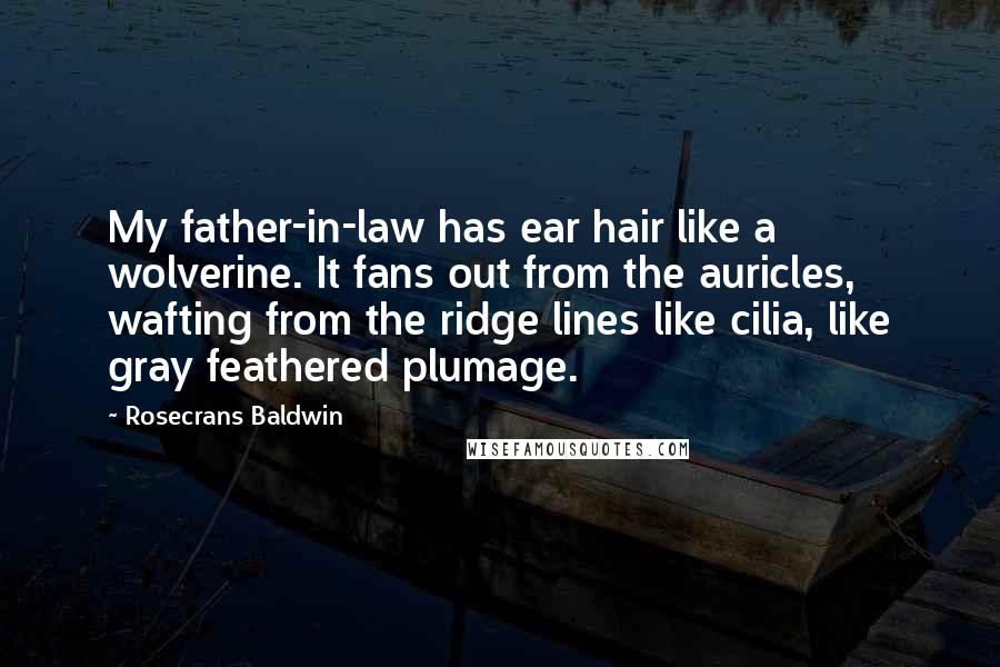 Rosecrans Baldwin quotes: My father-in-law has ear hair like a wolverine. It fans out from the auricles, wafting from the ridge lines like cilia, like gray feathered plumage.