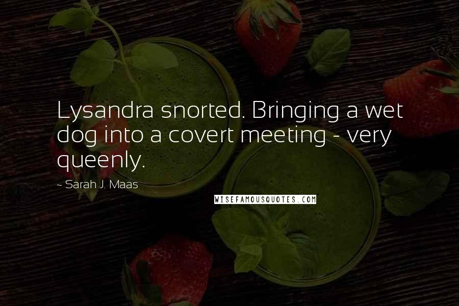 Sarah J. Maas quotes: Lysandra snorted. Bringing a wet dog into a covert meeting - very queenly.