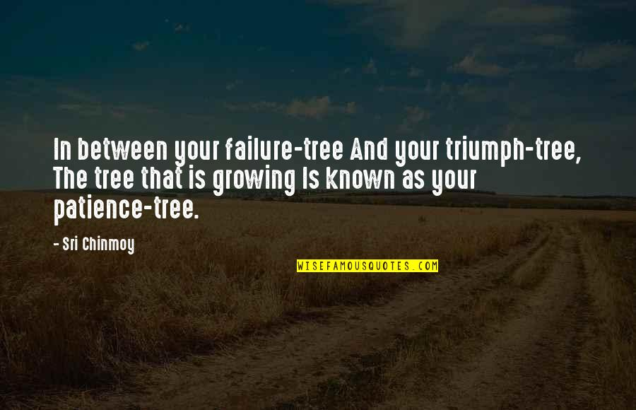 Seeing With Different Eyes Quotes By Sri Chinmoy: In between your failure-tree And your triumph-tree, The