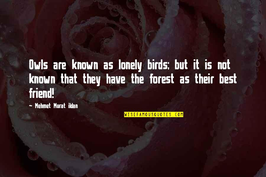 Sekito Kisen Quotes By Mehmet Murat Ildan: Owls are known as lonely birds; but it