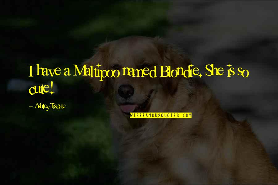 So Cute Quotes By Ashley Tisdale: I have a Maltipoo named Blondie. She is