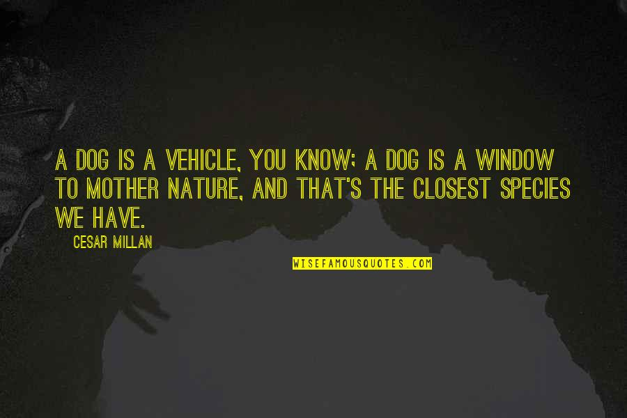 Species's Quotes By Cesar Millan: A dog is a vehicle, you know; a