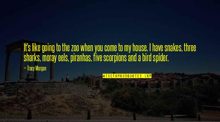 Spider Quotes By Tracy Morgan: It's like going to the zoo when you