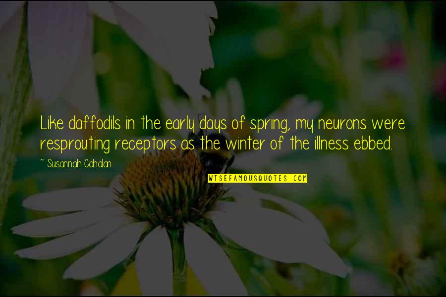 Spring Days Quotes By Susannah Cahalan: Like daffodils in the early days of spring,