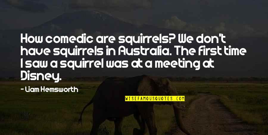 Squirrel Quotes By Liam Hemsworth: How comedic are squirrels? We don't have squirrels