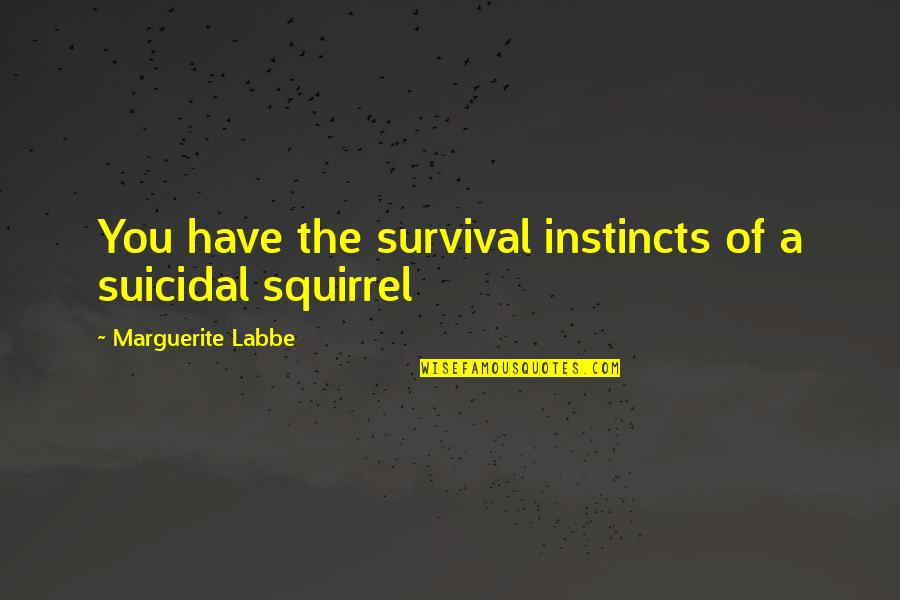 Squirrel Quotes By Marguerite Labbe: You have the survival instincts of a suicidal