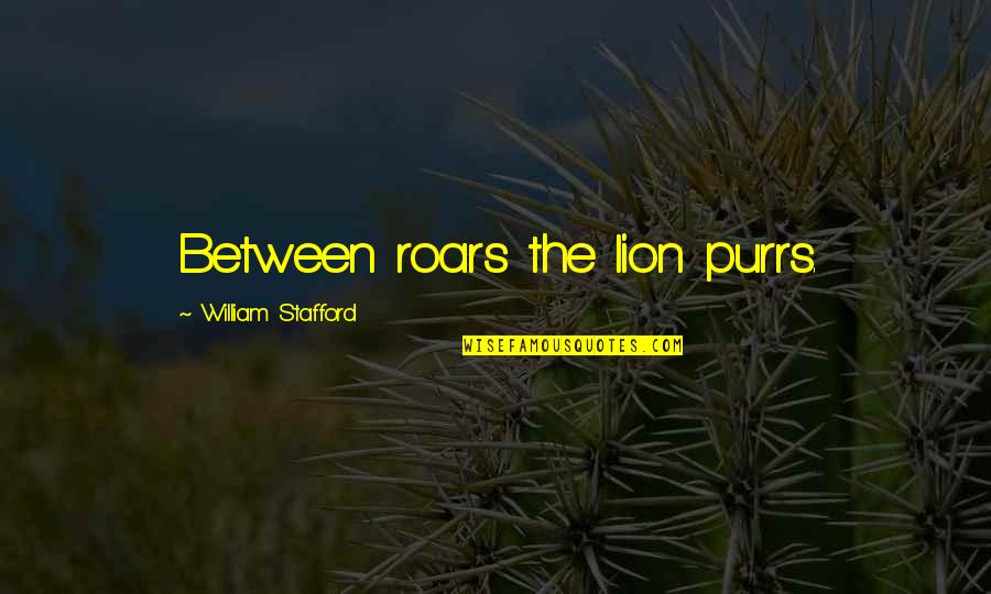 Stafford's Quotes By William Stafford: Between roars the lion purrs.
