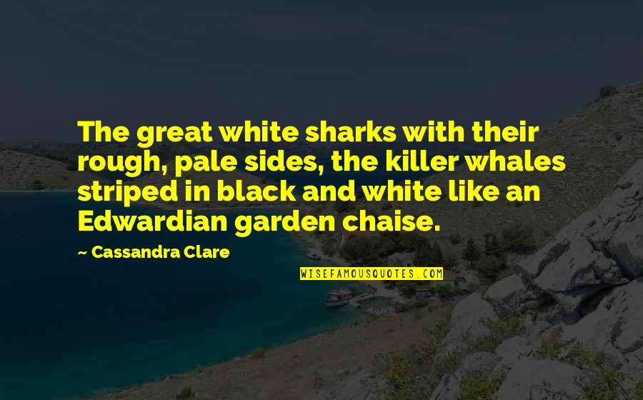 Striped Quotes By Cassandra Clare: The great white sharks with their rough, pale