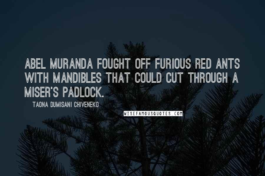 Taona Dumisani Chiveneko quotes: Abel Muranda fought off furious red ants with mandibles that could cut through a miser's padlock.