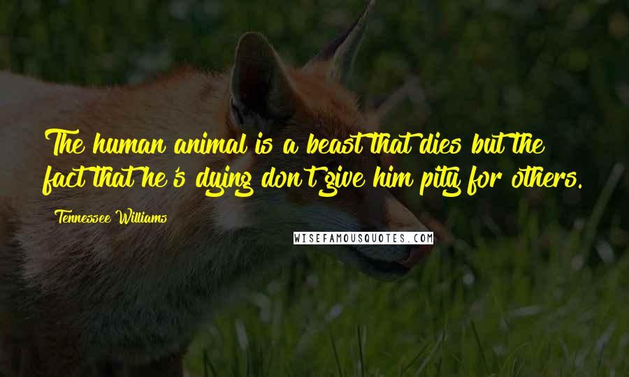 Tennessee Williams quotes: The human animal is a beast that dies but the fact that he's dying don't give him pity for others.