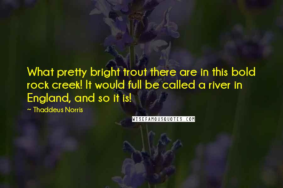 Thaddeus Norris quotes: What pretty bright trout there are in this bold rock creek! It would full be called a river in England, and so it is!