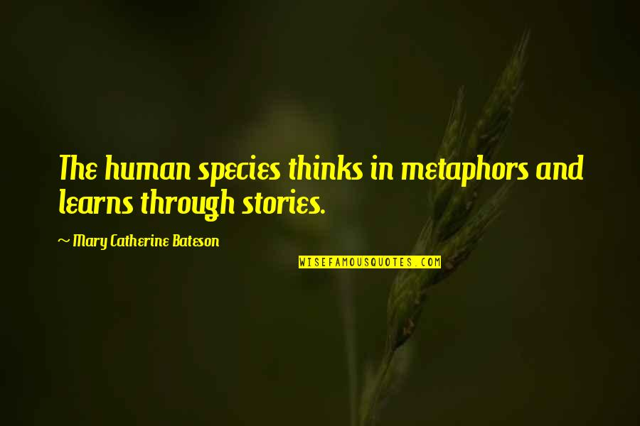 Thanks For The Likes And Comments Quotes By Mary Catherine Bateson: The human species thinks in metaphors and learns
