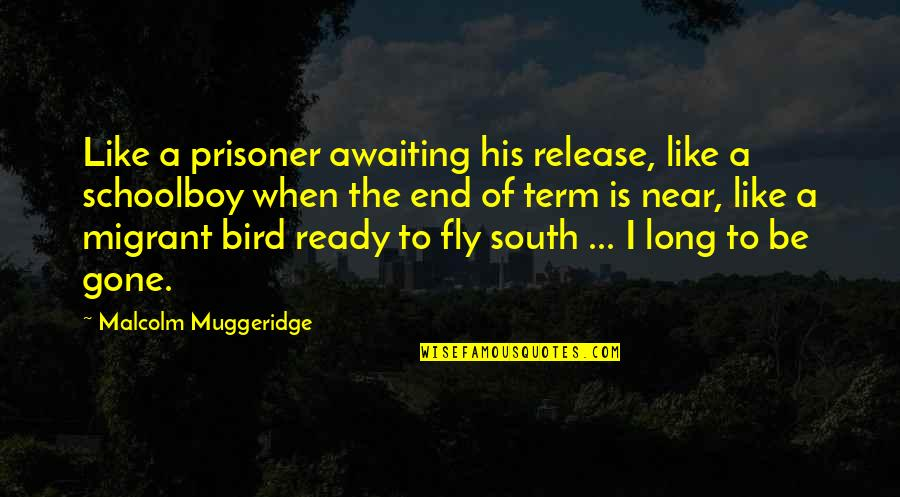 The End Is Near Quotes By Malcolm Muggeridge: Like a prisoner awaiting his release, like a