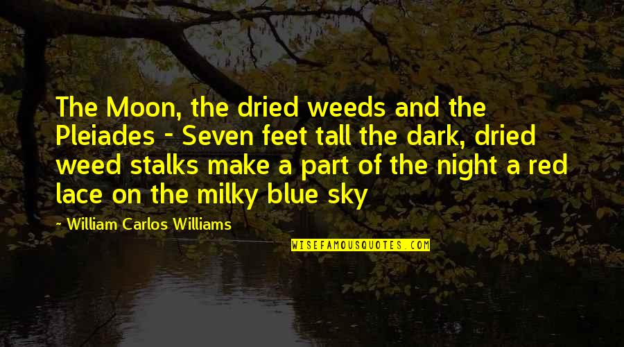 The Moon And Sky Quotes By William Carlos Williams: The Moon, the dried weeds and the Pleiades