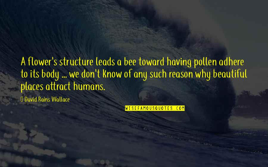 The Most Beautiful Places Quotes By David Rains Wallace: A flower's structure leads a bee toward having