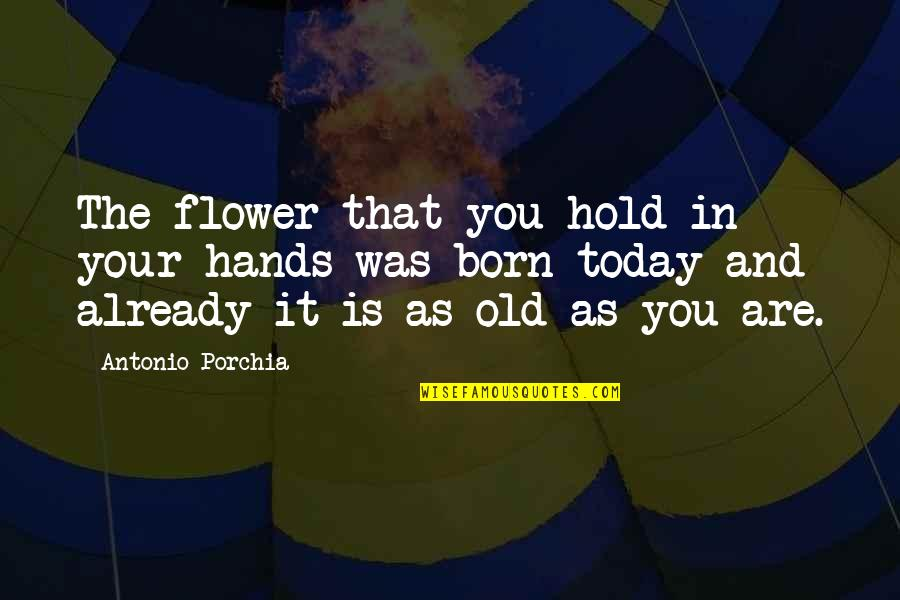 The Old Time Quotes By Antonio Porchia: The flower that you hold in your hands