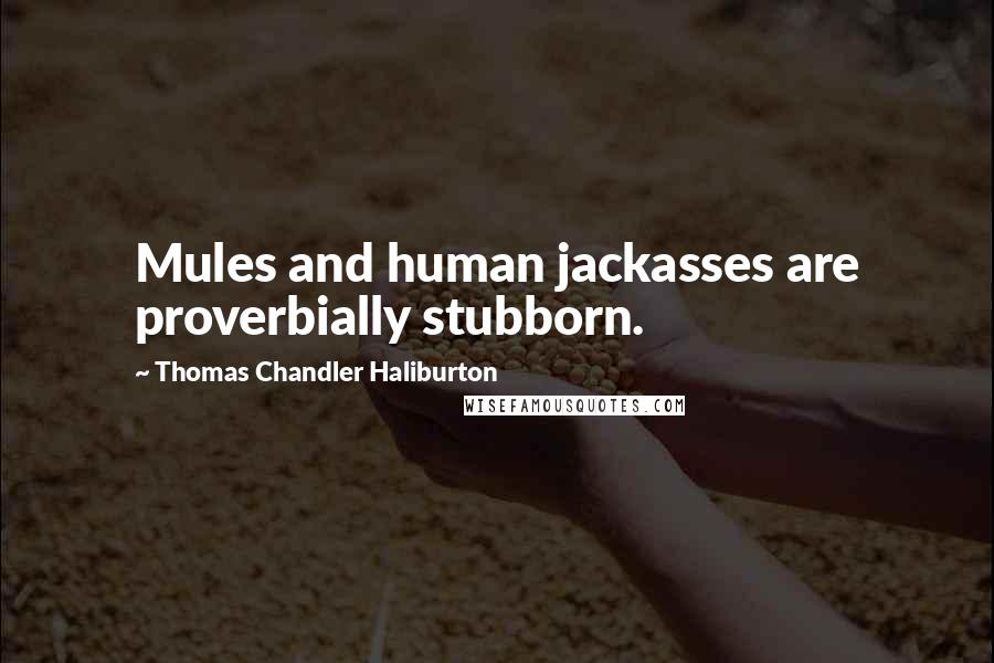 Thomas Chandler Haliburton quotes: Mules and human jackasses are proverbially stubborn.