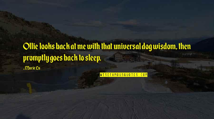 To Sleep Quotes By Marie Lu: Ollie looks back at me with that universal