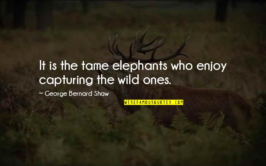 Transgressive Fiction Quotes By George Bernard Shaw: It is the tame elephants who enjoy capturing