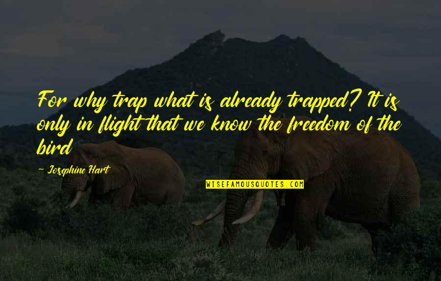 Trapped Bird Quotes By Josephine Hart: For why trap what is already trapped? It