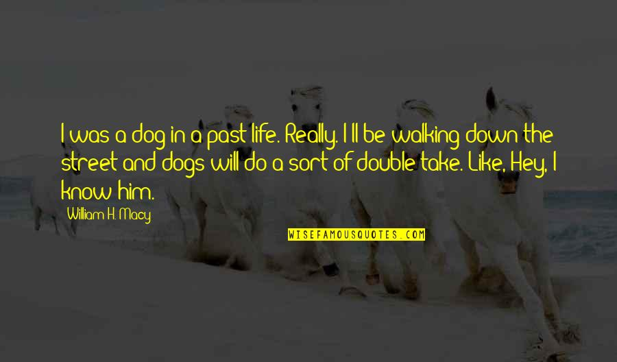 Walking With My Dog Quotes By William H. Macy: I was a dog in a past life.