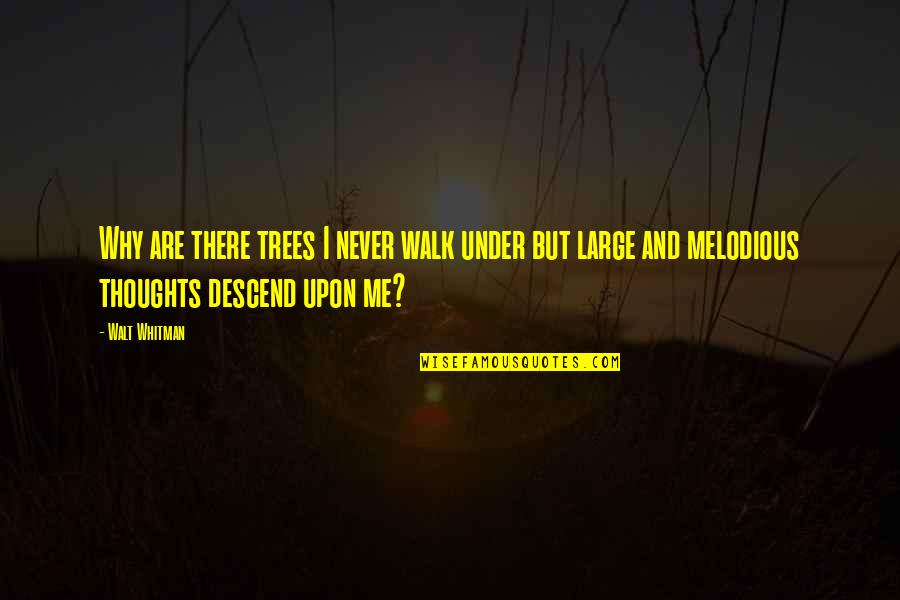 Walt Whitman Quotes By Walt Whitman: Why are there trees I never walk under