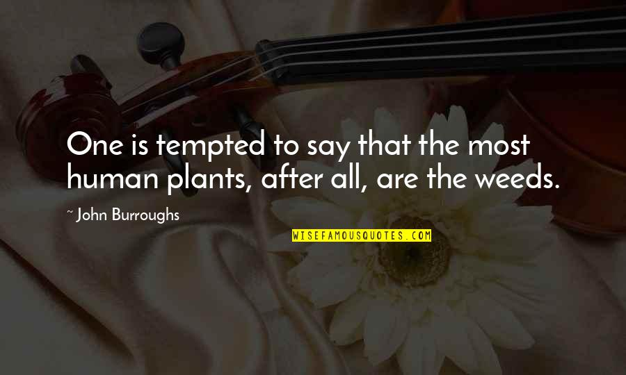 Weeds Quotes By John Burroughs: One is tempted to say that the most