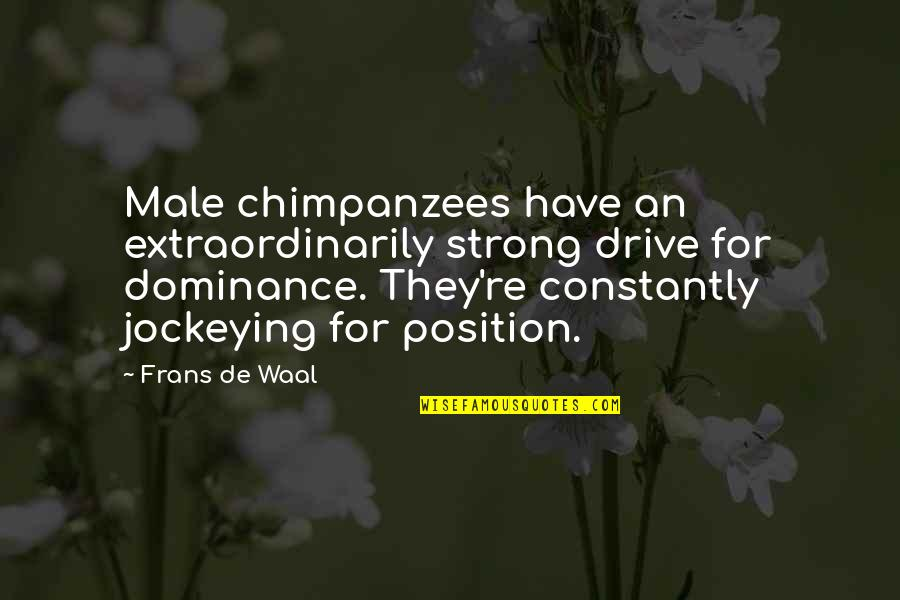 West Virginia University Quotes By Frans De Waal: Male chimpanzees have an extraordinarily strong drive for