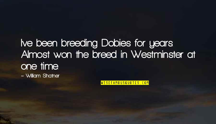 Westminster's Quotes By William Shatner: I've been breeding Dobies for years. Almost won