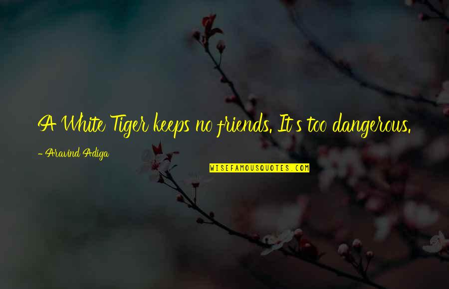 White Tiger Quotes By Aravind Adiga: A White Tiger keeps no friends. It's too