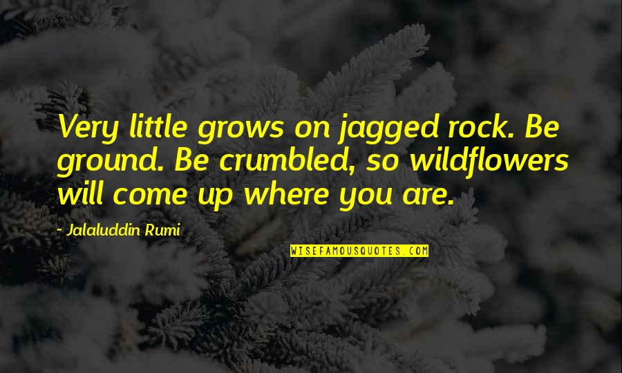 Wildflowers Quotes By Jalaluddin Rumi: Very little grows on jagged rock. Be ground.