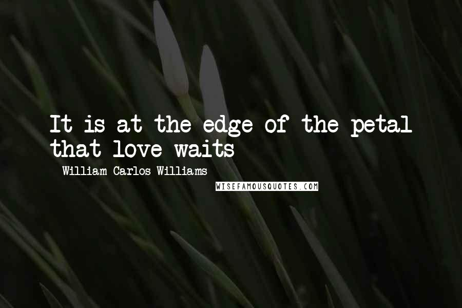 William Carlos Williams quotes: It is at the edge of the petal that love waits