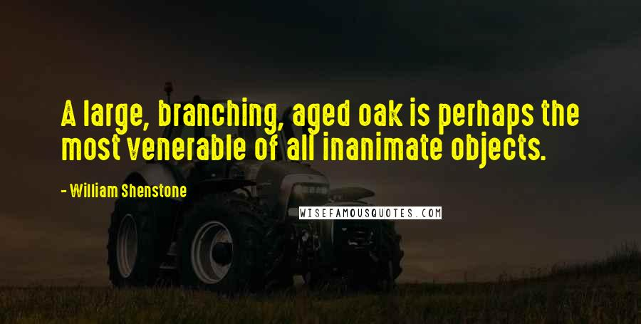William Shenstone quotes: A large, branching, aged oak is perhaps the most venerable of all inanimate objects.