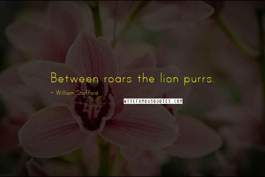William Stafford quotes: Between roars the lion purrs.