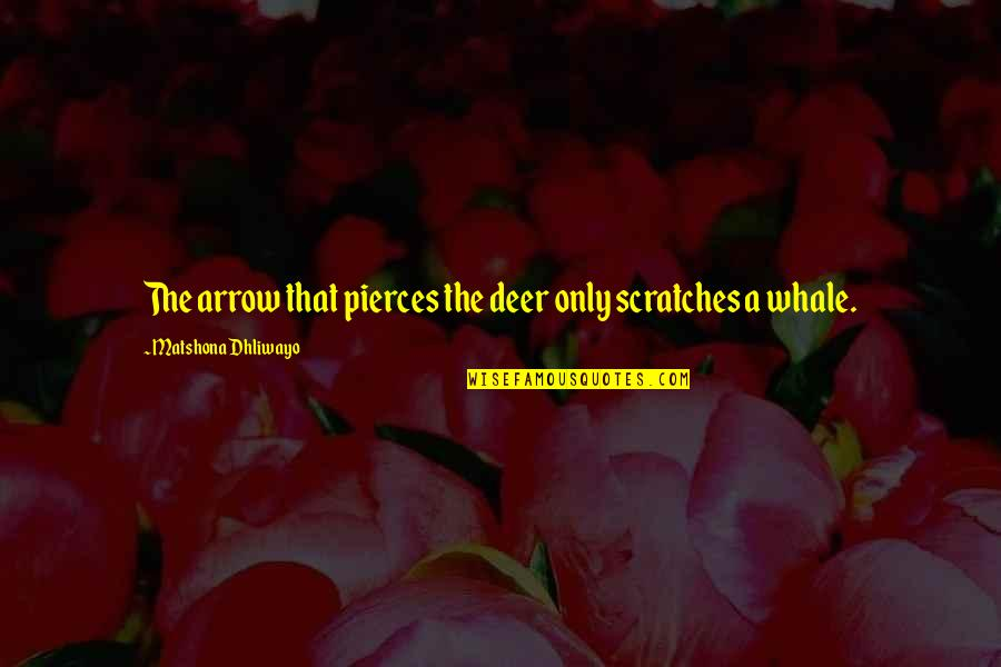 Wise Quotes Nd Quotes By Matshona Dhliwayo: The arrow that pierces the deer only scratches