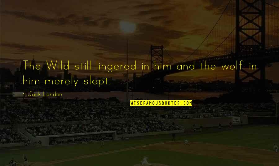 Wolf O'donnell Quotes By Jack London: The Wild still lingered in him and the