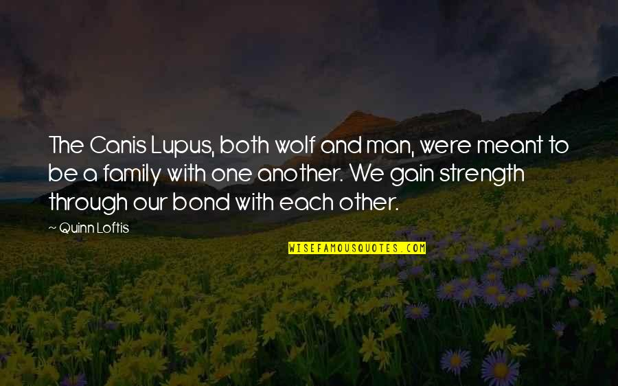 Wolves And Family Quotes By Quinn Loftis: The Canis Lupus, both wolf and man, were