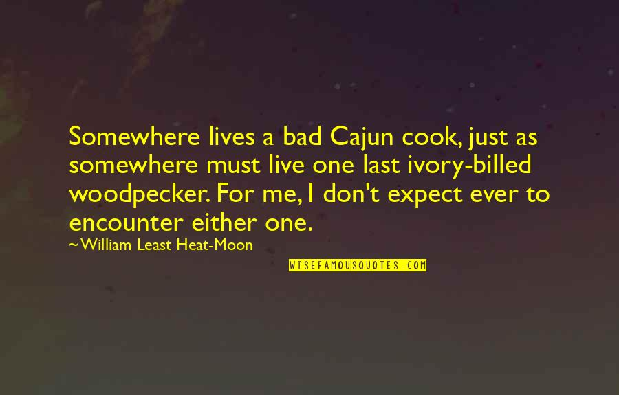 Woodpecker Quotes By William Least Heat-Moon: Somewhere lives a bad Cajun cook, just as