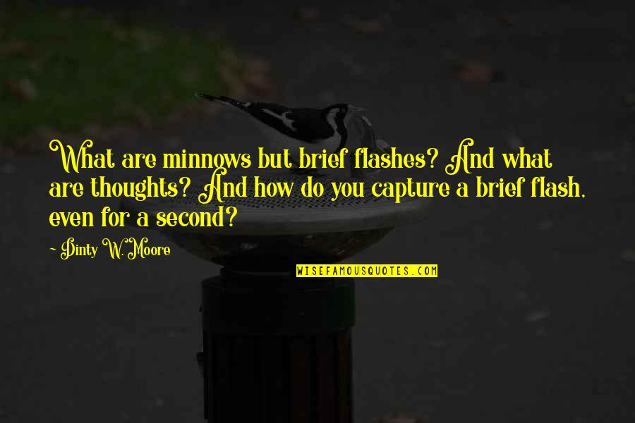 Writing Your Thoughts Quotes By Dinty W. Moore: What are minnows but brief flashes? And what