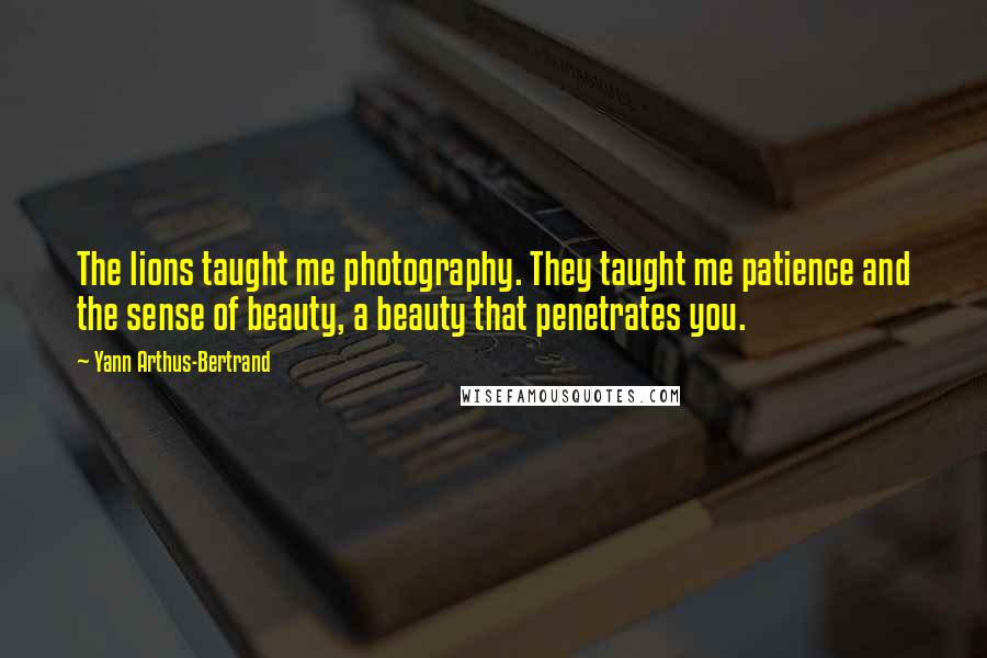 Yann Arthus-Bertrand quotes: The lions taught me photography. They taught me patience and the sense of beauty, a beauty that penetrates you.