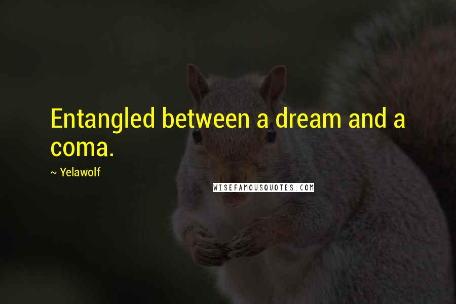 Yelawolf quotes: Entangled between a dream and a coma.