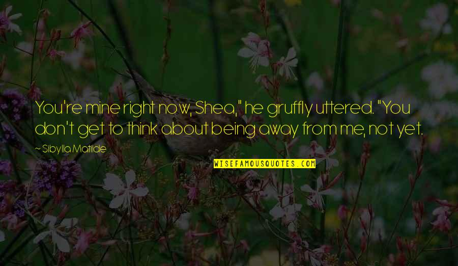 "You Not Mine Quotes By Sibylla Matilde: You're mine right now, Shea,"" he gruffly uttered."