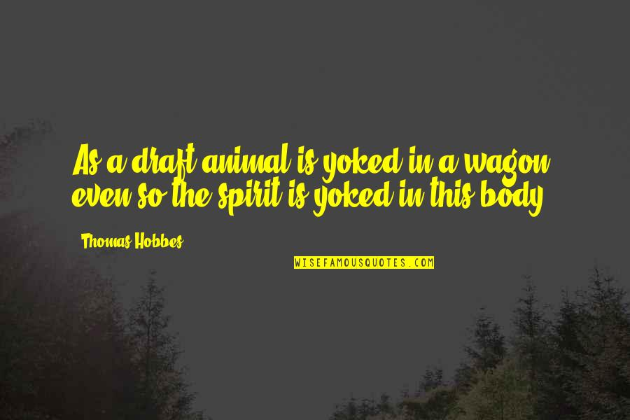 Your Spirit Animal Quotes By Thomas Hobbes: As a draft-animal is yoked in a wagon,