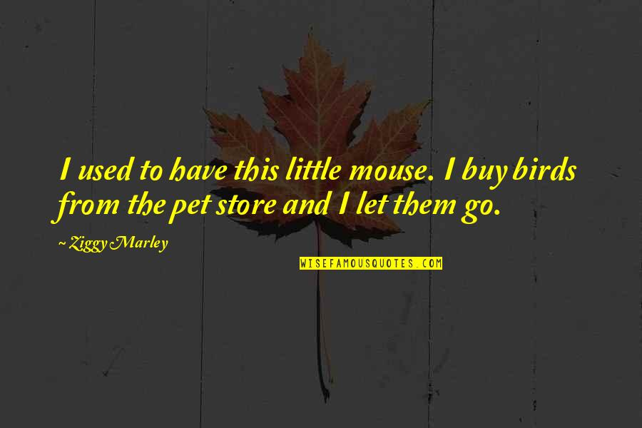 Ziggy Marley Quotes By Ziggy Marley: I used to have this little mouse. I