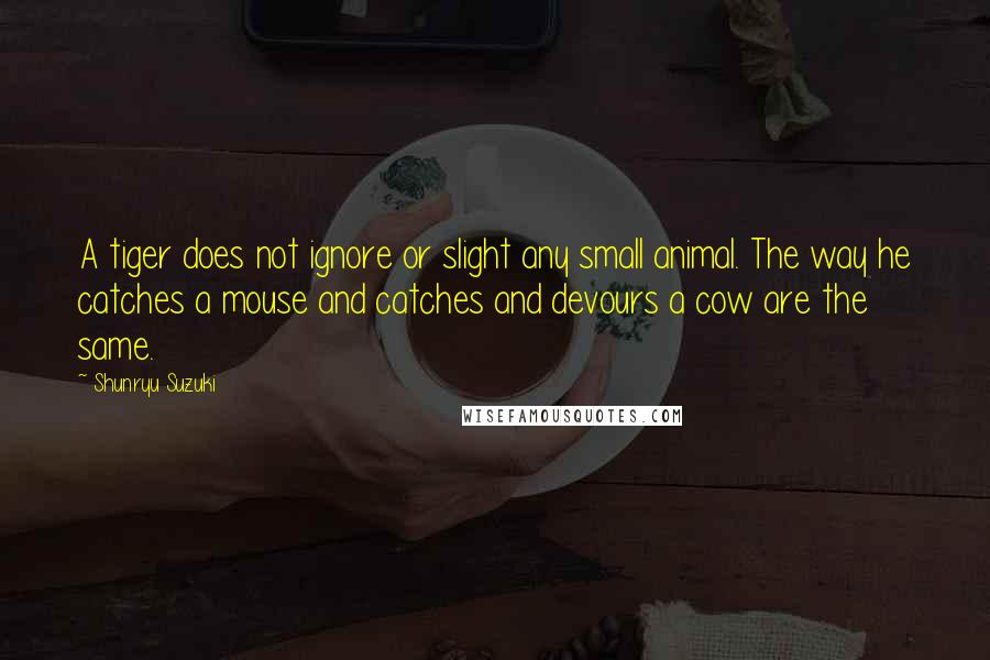 Shunryu Suzuki Quotes: A tiger does not ignore or slight any small animal. The way he catches a mouse and catches and devours a cow are the same.
