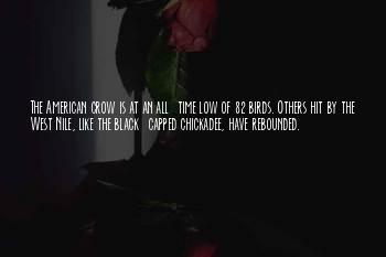 Chickadee Bird Quotes
